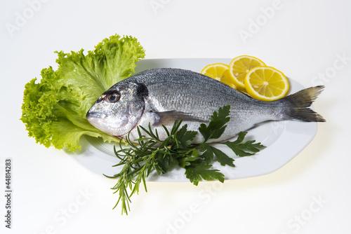 Fisch Dorade küchenfertig