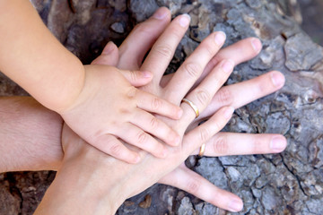 Three hands of family on tree bark - baby, mother and father