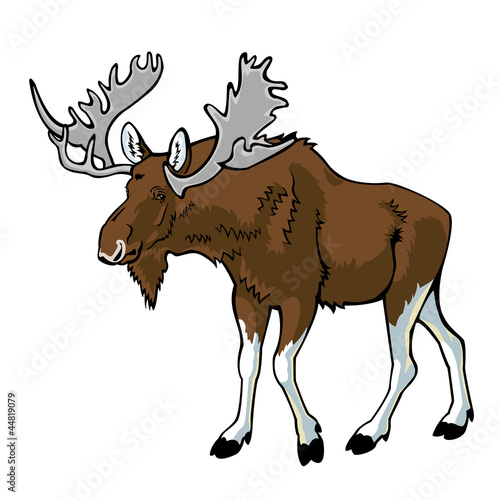 moose on white