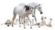 Fototapeten,pferd,camargues,hund,weiß