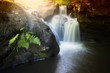 waterfall and plants on a mountain river