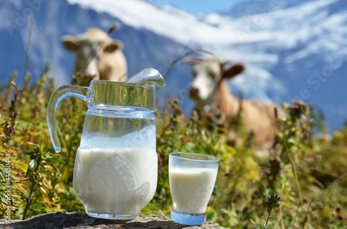 Jug of milk against herd of cows. Switzerland