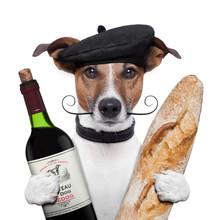 Franse hond wijn stokbrood baret