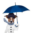 canvas print picture - rain umbrella dog