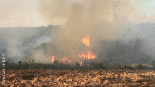 Forest fire in the countryside from Portugal