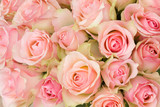 Fototapety bouquet of pink roses