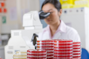 Technician looking into microscope in laboratory with petri dishes in foreground