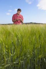 Farmer examining wheat in field
