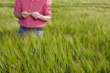 Farmer examining wheat in field