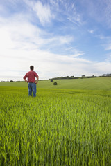 Farmer with hands on hips in wheat field