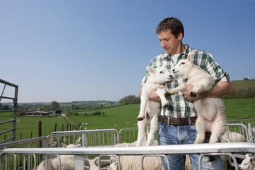 Shepherd holding lambs in pasture