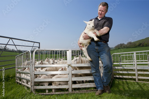 Shepherd holding lamb in pasture