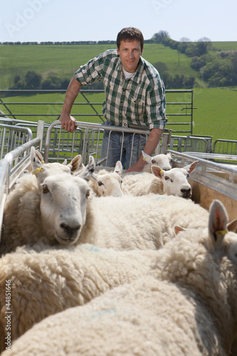 Portrait of shepherd pushing sheep in gated pasture