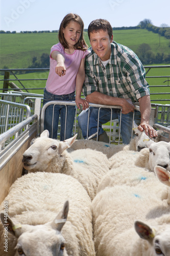 Shepherd and daughter counting sheep in gated pasture