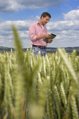 Farmer using digital tablet in young wheat field