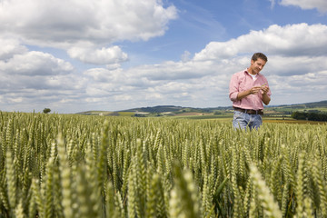 Farmer inspecting young wheat crop