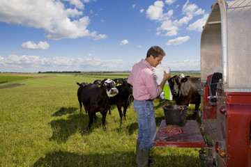 Farmer preparing feed for cattle on truck bed in sunny rural field
