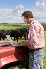 Farmer using laptop on truck among cattle herd in sunny rural field