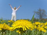 Woman with arms raised in field of blooming dandelions