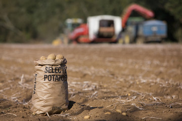 Sack of potatoes in sunny, rural field with tractors in background