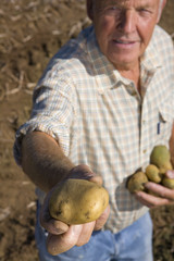 Portrait of farmer holding potato to camera in rural field