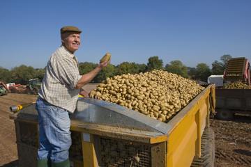 Smiling farmer inspecting potatoes from trailer in sunny, rural field