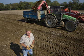 Portrait of smiling farmer holding potatoes in sunny, rural field with tractor in background