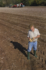 Farmer inspecting potatoes in sunny, rural field