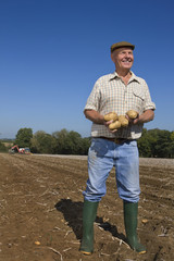 Smiling farmer holding potatoes in sunny, rural field