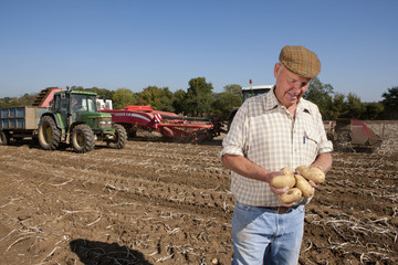 Farmer inspecting potatoes in sunny, rural field with tractors in background