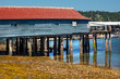 Old Fishing Dock Low Tide Gig Harbor Washington State