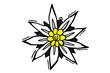 Edelweiss, Gebirgsblume