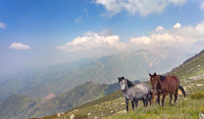 The horses in the mountains in Tibet.