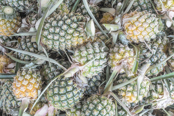 group of fresh pineapple of thailand
