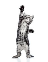 Figlarny kociak kot na białym tle