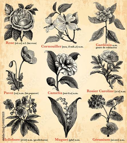 Deurstickers Kranten Fleurs du jardin