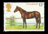 UK stamp featuring a thoroughbred horse, circa 1978