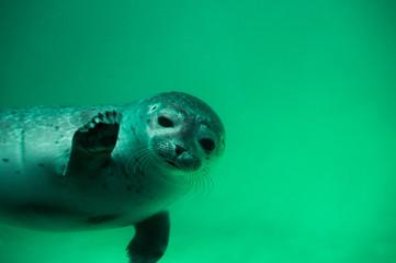 Seehund winkt - Grüße von der Nordsee