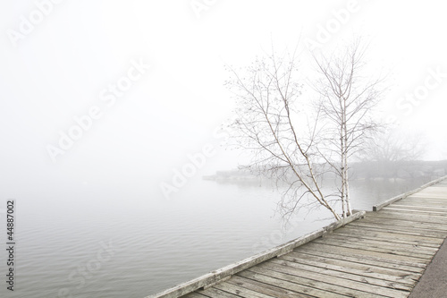 Pier and white birch trees on foggy lake