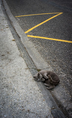chat gris sur la route