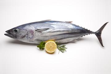 Tuna fish.