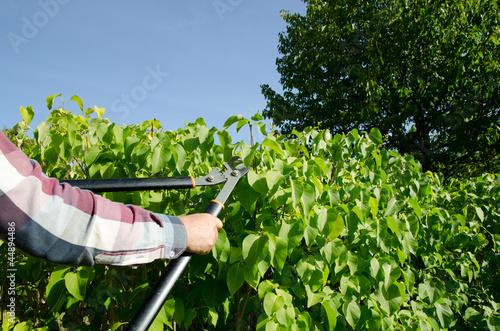 Cutting bushes