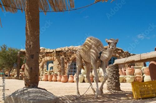 Fotobehang Tunesië chameau potier