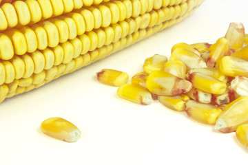 cobs and corn