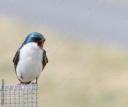 angry little bird