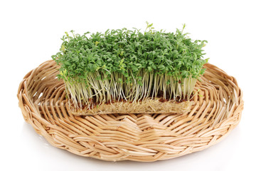 Fresh garden cress on wicker cradle isolated on white