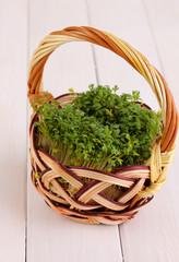Fresh garden cress on basket on wooden table