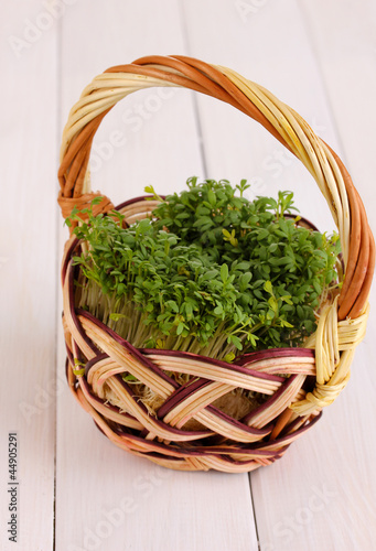 Fresh garden cress on basket on wooden table