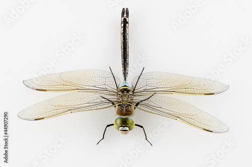 Dragonfly Anax parthenope isolated on white background