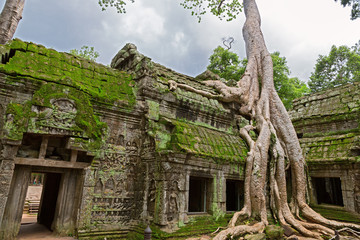 Trees in Ta Prohm, Angkor Wat